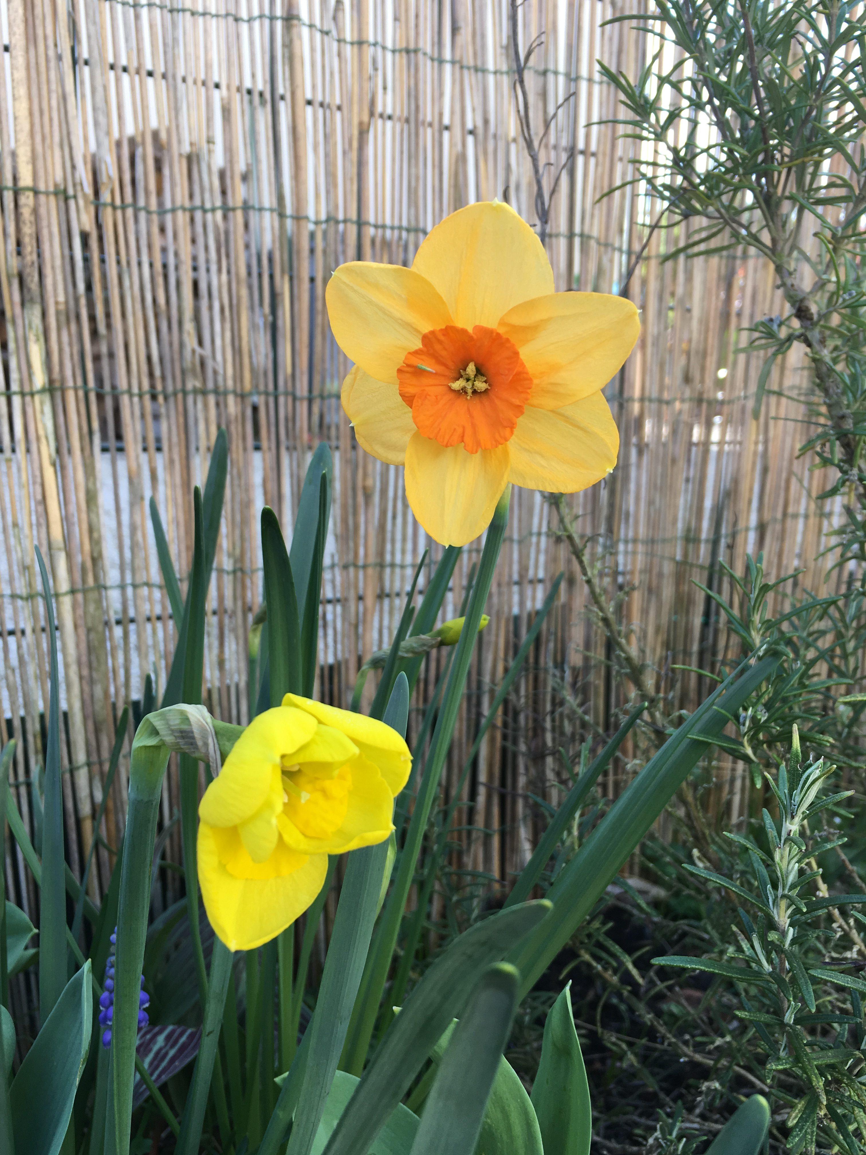 Le jardin se réveille, mars.