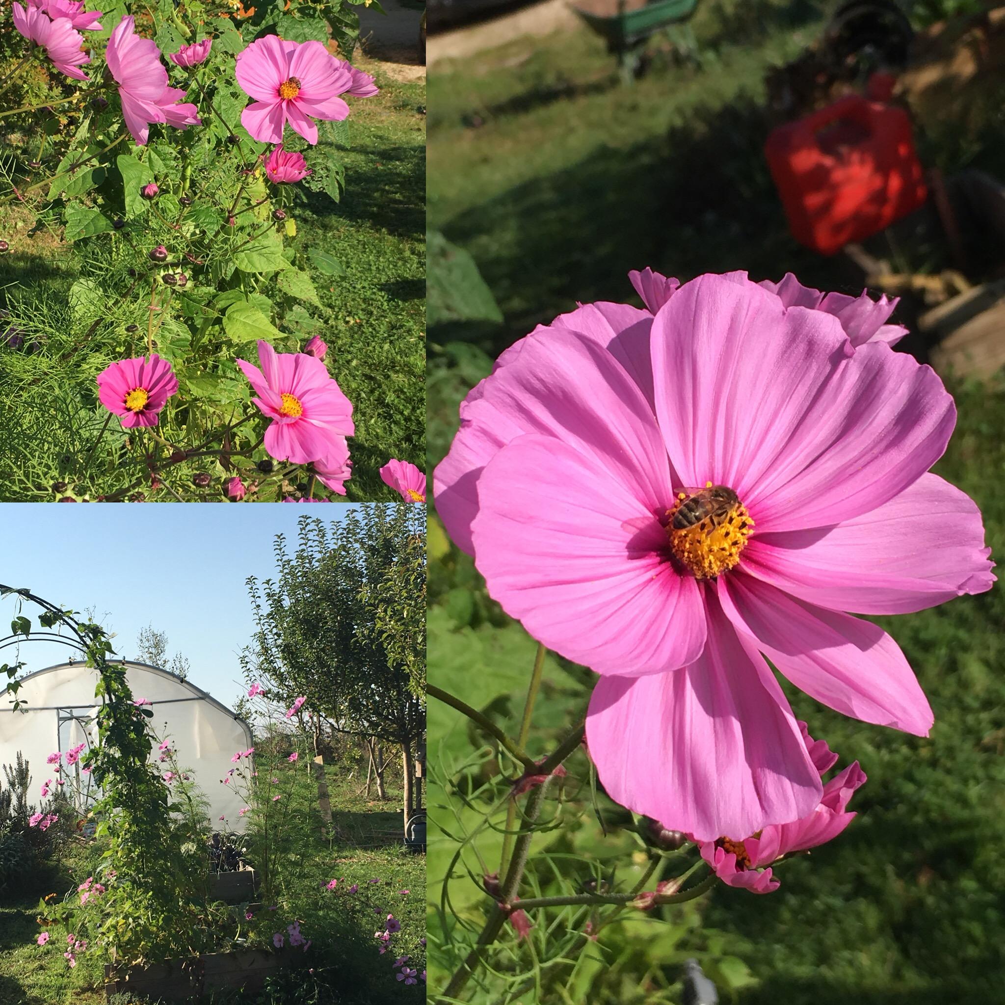 Jardin en septembre/octobre