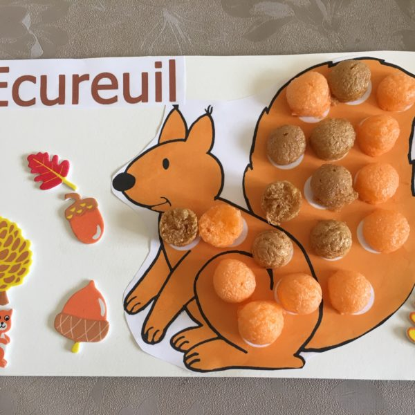 Ecureuil gourmand